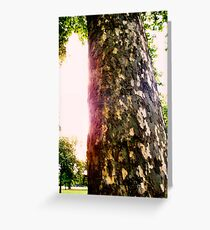 Tree in Kensington Gardens Greeting Card