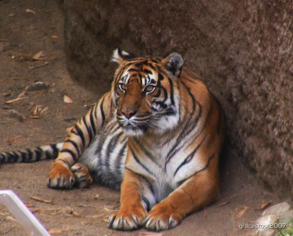 TIGER by gracestout2007