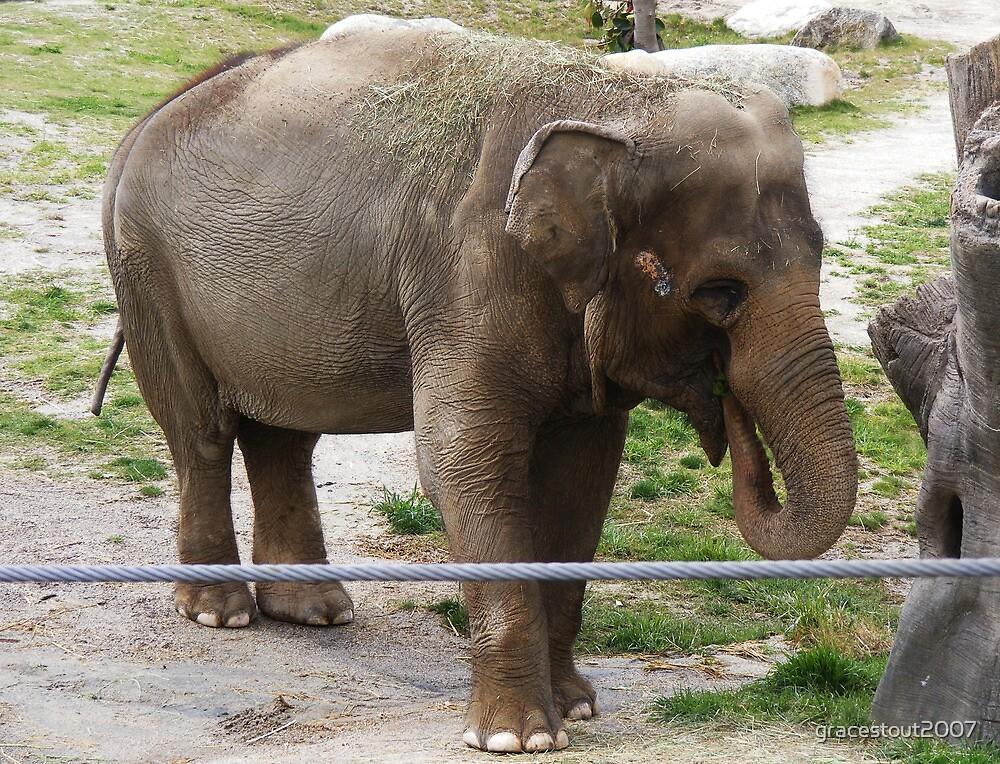 ELEPHANT by gracestout2007