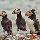 Puffins by M S Photography/Art