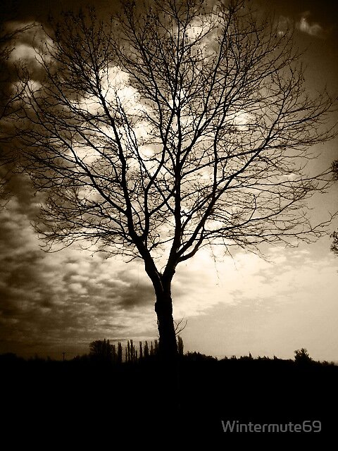 Dark tree by Wintermute69
