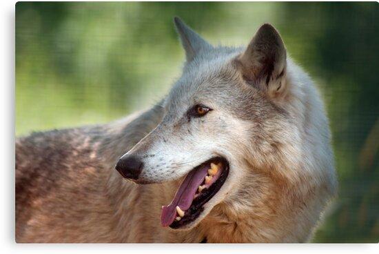 Wolf by Susan P Watkins