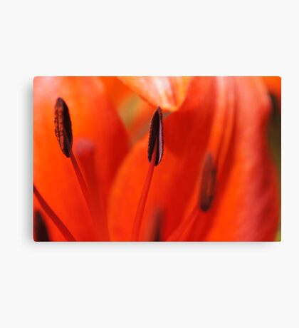 All About Lilies Canvas Print
