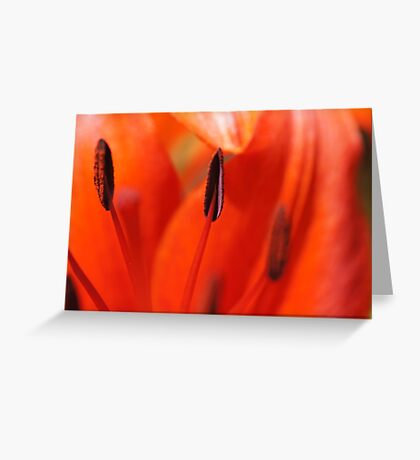 All About Lilies Greeting Card