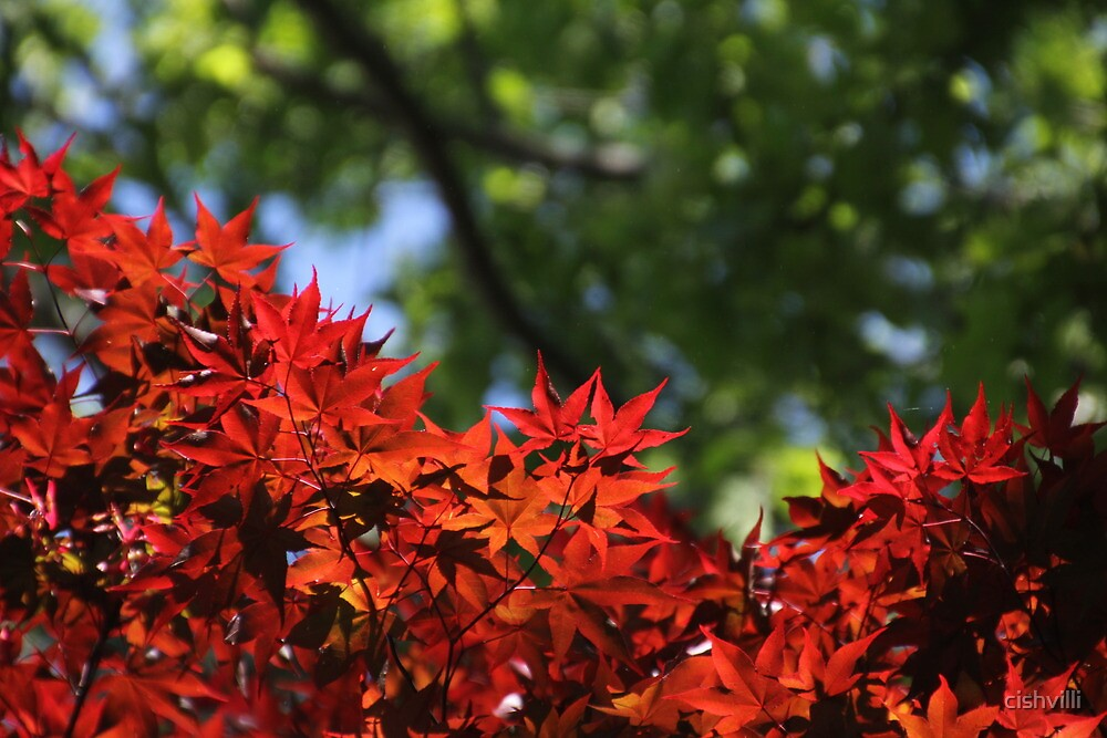 Red and Green by cishvilli