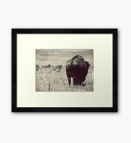 Bison Butt Framed Print