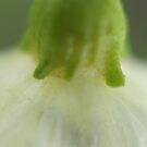 Delicate Closeup by Lorelle Gromus
