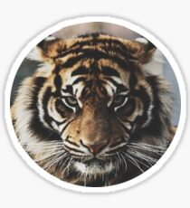 Tiger Face Sticker