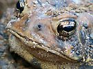 Toad Face by FrankieCat