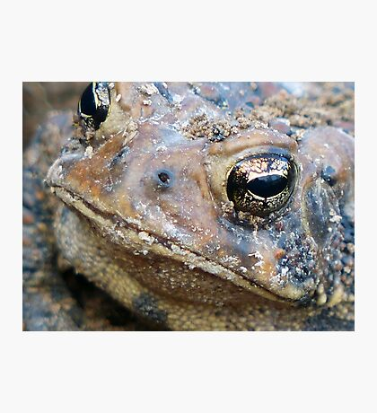 Toad Face Photographic Print
