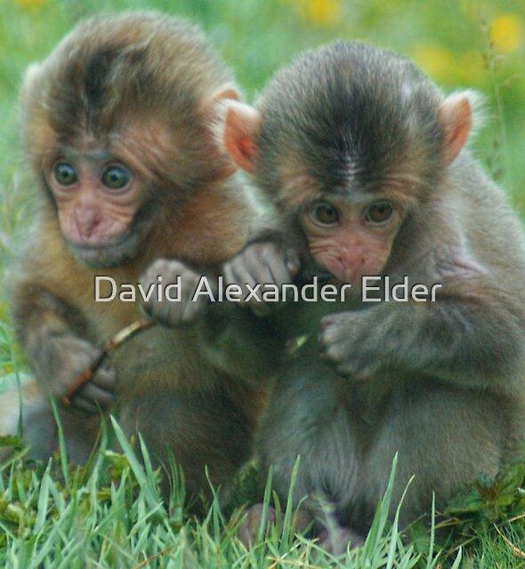Baby Snow Monkeys by David Alexander Elder