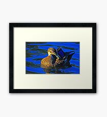 Duck in blue Framed Print