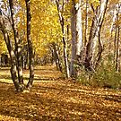 Autumn Gold by Shulie1