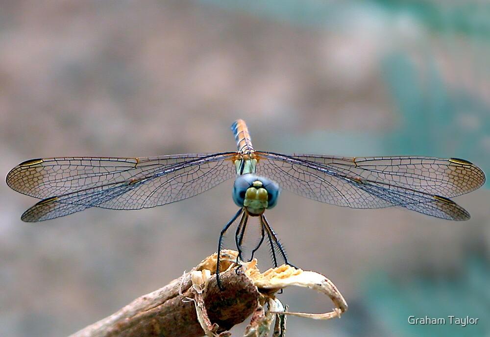 Dragonfly Headshot by Graham Taylor