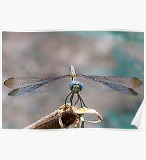 Dragonfly Headshot Poster