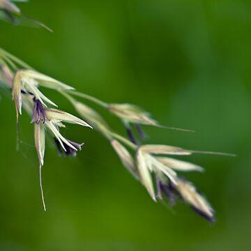 Wild Grass Seeds by InspiraImage