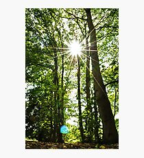 from the forest floor Photographic Print