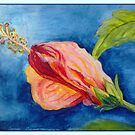 The flowers of hibiscus by Victoria  _Ts