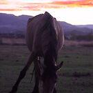 Wild Horse Sunset by Mickey Hatt
