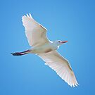 Cattle Egret in Flight by Bonnie T.  Barry