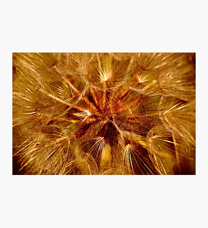 Dandelion Clock Photographic Print