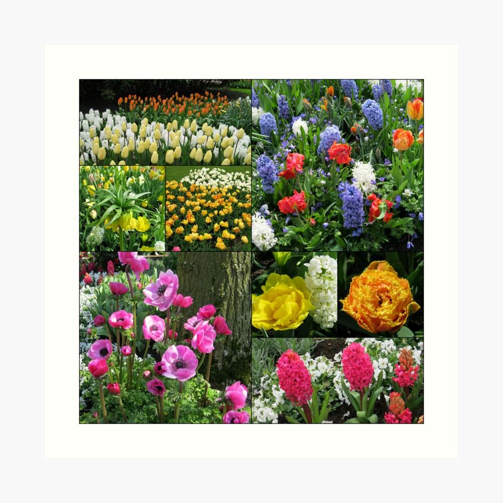 Keukenhof Collage featuring Anemones and Hyacinths Kunstdruck