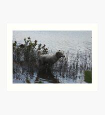 Water Adventure Flying Goliath Art Print