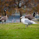 Birds in Stanley Park by Steve Hunter