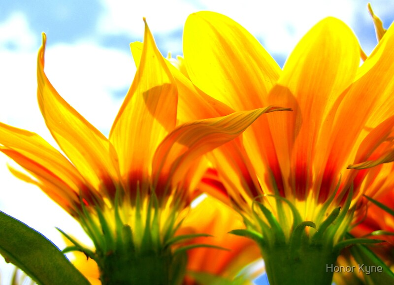 Quot Sunshine Flowers Quot By Honor Kyne Redbubble