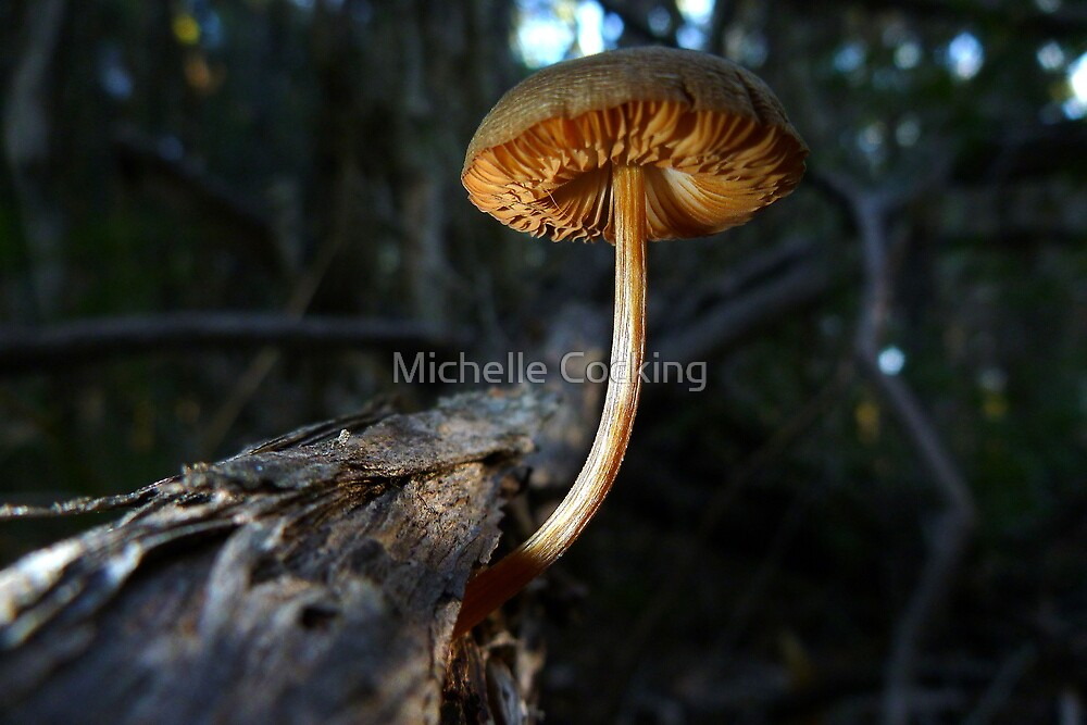 Fungi by Michelle Cocking