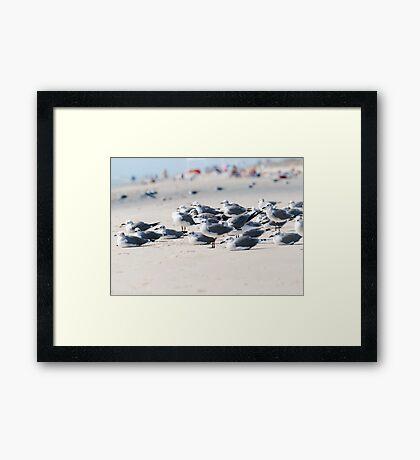 Room for All Framed Print
