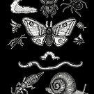 Creepy Crawlies by BettyRocksteady