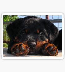 Cute Rottweiler Puppy Resting Head Between Paws Sticker