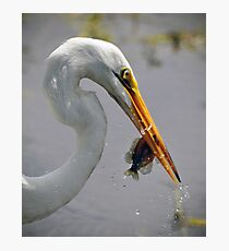 Great Egret with Perch Photographic Print