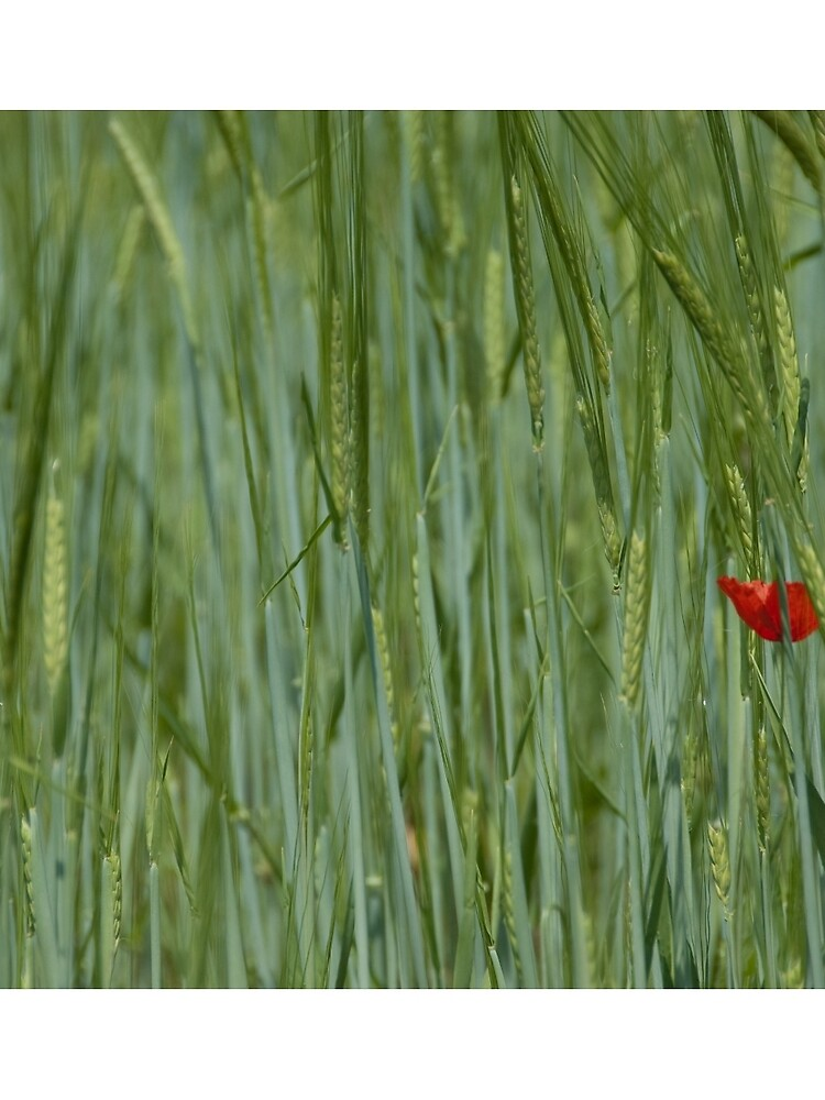Field with flower, Castle Trauttmansdorff Gardens, Merano/Meran, Italy by leemcintyre