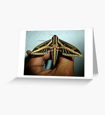 Hawkmoth Greeting Card