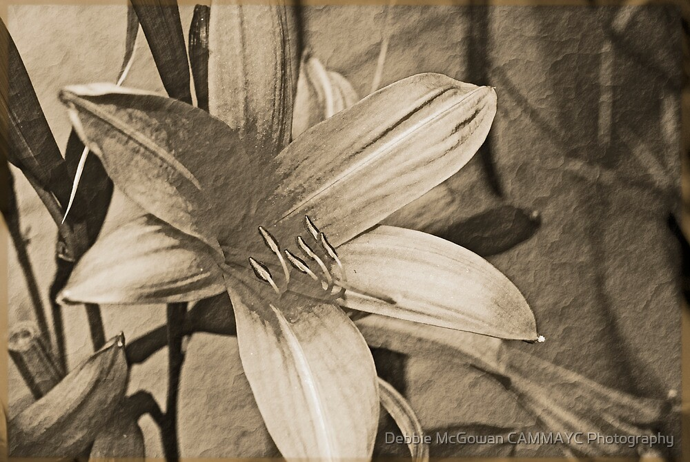 Antique Floral 7 by Debbie McGowan CAMMAYC Photography