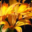 Yellow Lilies by Lorelle Gromus