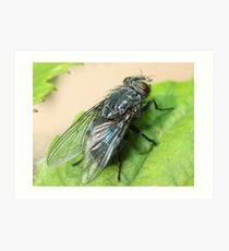 Housefly  Art Print