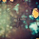 Spiderweb by Irene2005