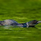 Leaning Loon  by Daniel  Parent