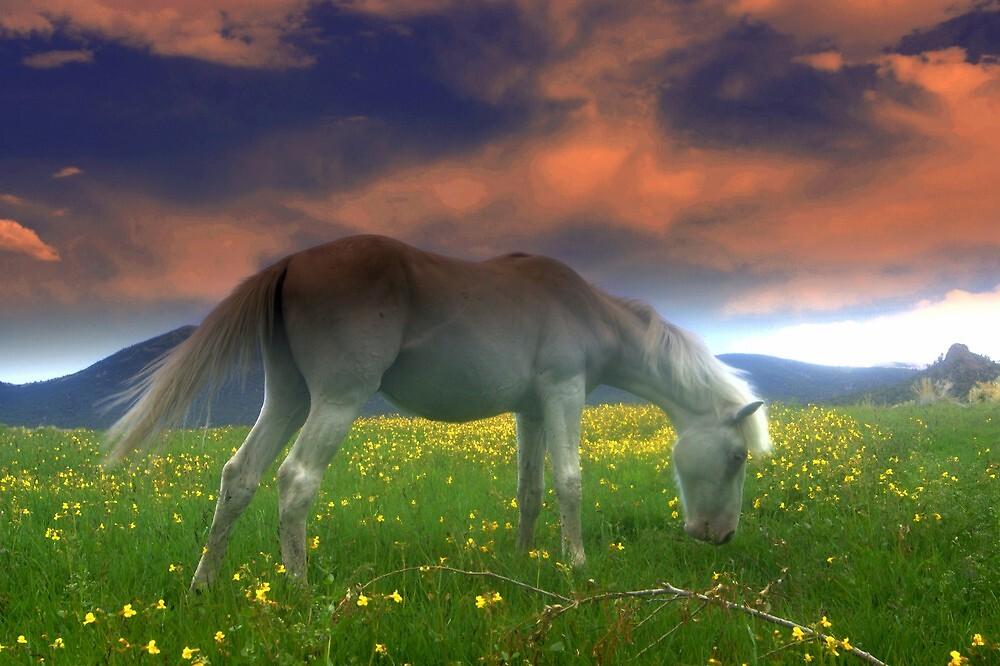 Field Of Dreams With Heavenly Skies  by Jeanne  Nations
