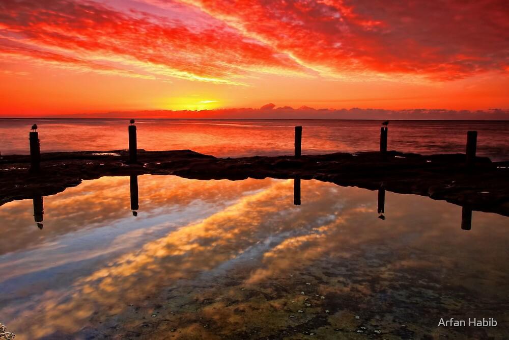 Three Seagulls and the Sunrise by Arfan Habib