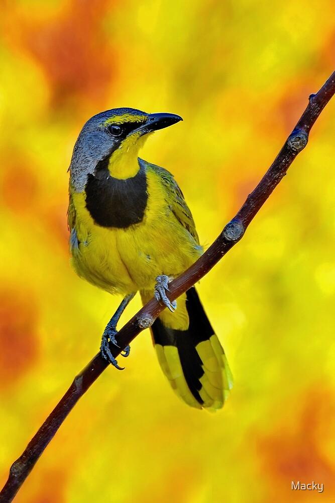 Yellow Bird......♪♫♪♪♫.......... by Macky