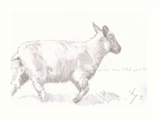 sheep walking pencil drawing by mikejory