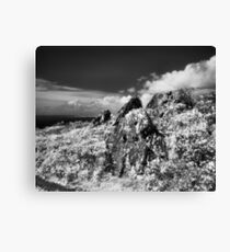Wolf Ridge, Marin Headlands Canvas Print