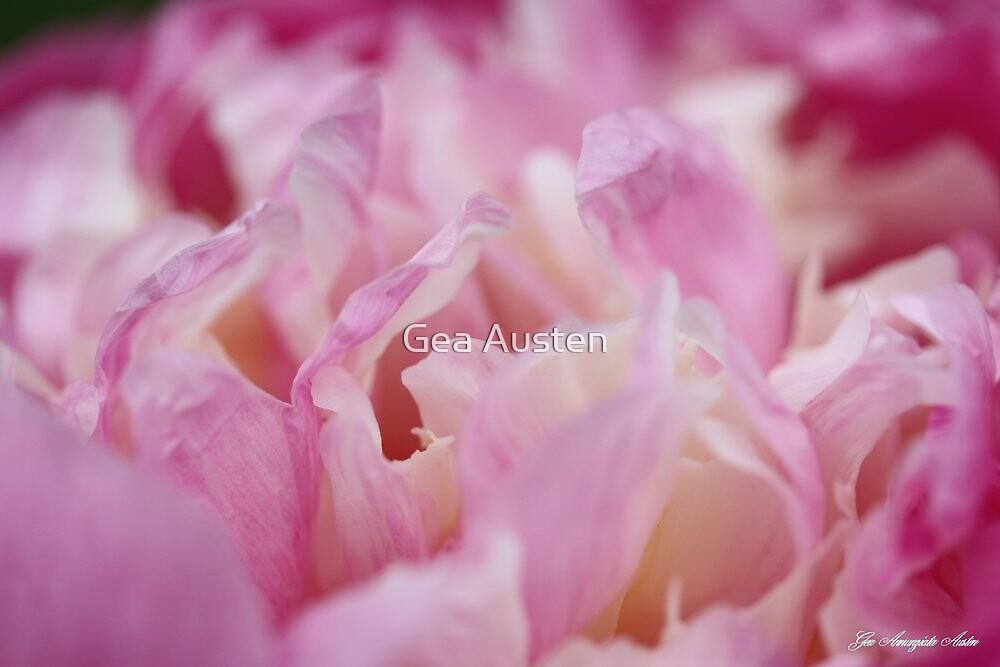 PEONY BOWL OF BEAUTY 2012 by Gea Austen