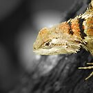 Lizard by plopezjr