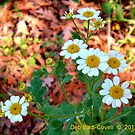 A Few, Feverfew by Deb  Badt-Covell