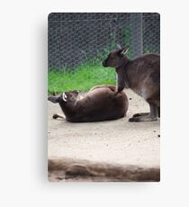 How About A Tummy Rub? Canvas Print